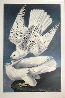 The Gyr Falcon, After Audubon, Bernard Loates