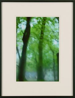 CAROL WONTKOWSKI, Ghost Among the Leaves - 5