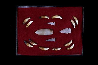 Bear Tooth Projectile Point Collection 9500-650BP