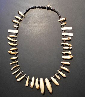 Northern Plains Coyote Teeth Necklace 19th Century