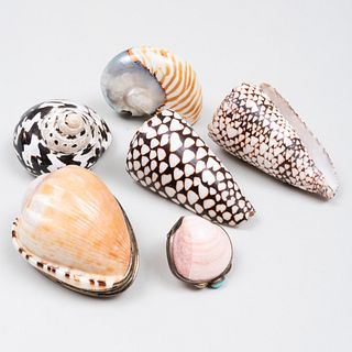 Two Shell Form Snuff Boxes and a Group of Four Shells