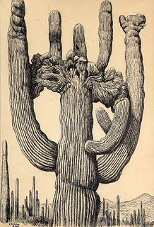 Conrad Buff, Cacti