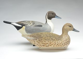 Rare pair of magnum pintails, Cigar Daisey, Chincoteague, Virginia.