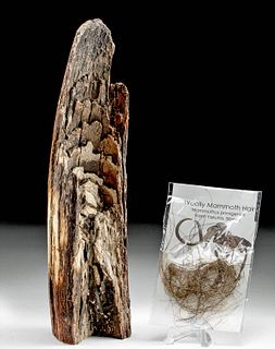 Fossilized Mammoth Tusk Fragment & Hair