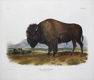 American Bison or Buffalo Pl. LVI