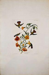 John James Audubon, Plate CLXXXIV Mangrove Humming Bird