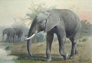 Pierre Jacques Smit (Dutch, 1863-1960) - Loxodonta Africana (African Elephant)