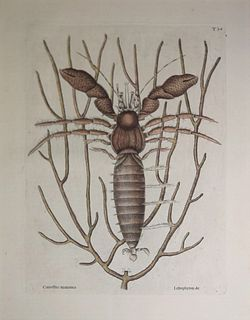 Mark Catesby (1683-1749) - T34-The Sea Hermit-Crab