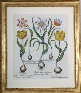 """Basilius Besler: """"Hortus Eystettensis"""", circa 1613."""