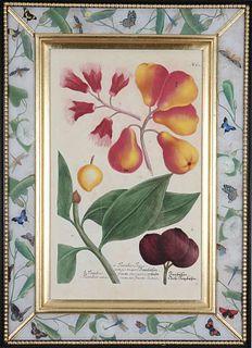 Johann Weinmann: c.18th engravings of fruit in decalcomania frames. Price each framed print.