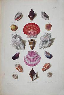 Franz Michael Regenfuss (1713-1780) - Tab 7