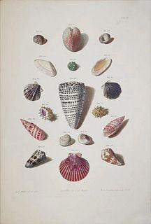 Franz Michael Regenfuss (1713-1780) - Tab 3