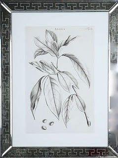 Jan & Caspar Commelin: 17th century botanical engravings