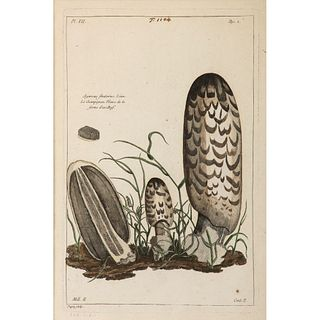 A French Hand-Colored Engraving, Agaricus Fimetarius