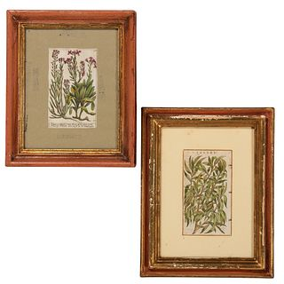 Six Hand-Colored Botanical Engravings