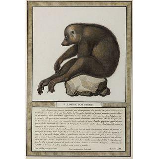 After Jean-Baptiste Audebert, Loride Hand-Colored Engraving