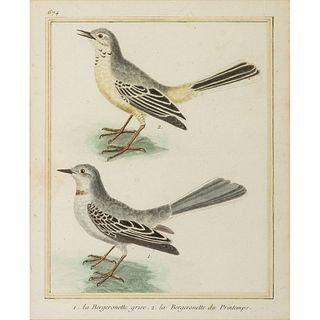 Five French Hand-Colored Avian Engravings