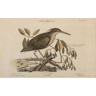 Five German-French Avian Hand-Colored Engravings