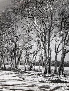 A. Aubrey Bodine Gelatin Silver Print