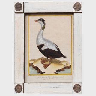 François Nicolas Martinet (1731-1804): Ornithological Prints: Four Plates
