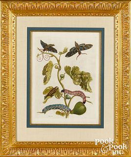 Maria Sibylla Merian plate 33, fig tree branch