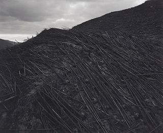 """Frank Gohlke """"Aerial View Downed Forest"""" Photograph"""