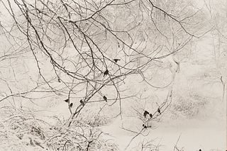 "Esther Bubley ""Birds in Snow Central Park"" Photograph"