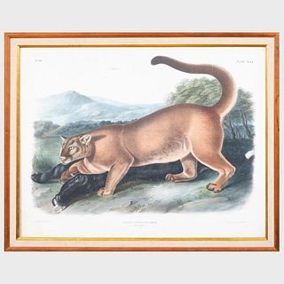 After John James Audubon (1785-1851): The Cougar, from Quadrupeds of North America