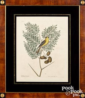 Three Mark Catesby color engravings