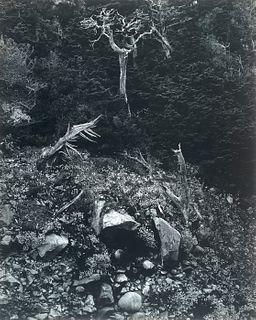 """Edward Weston, Am. 1886-1958, """"North Wall, Point Lobos"""" 1946, Gelatin silver print, mounted"""