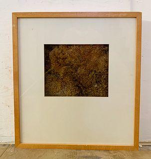 Framed Moss Tittled  by MOOD MOSS