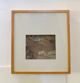 Framed Eucalyptus Bark by Mood Moss