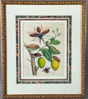 "Maria Sibylla Merian "" Metamorphosis Insectorum"" Print"