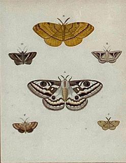 "Pieter Cramer Attributed, Moths, From ""Exotic Butterlies"""