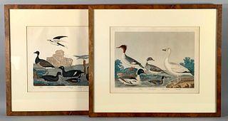 Two Alexander Wilson Ornithological Prints