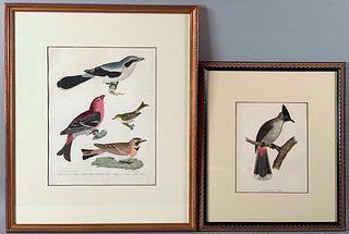 Two Ornithological Prints, Alexander Wilson
