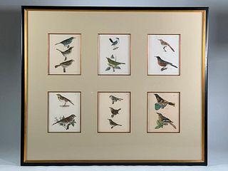 Six J.W.Hill Ornithological Prints Framed Together