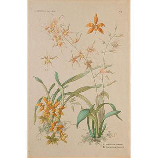 Henry Lambert Print, The Orchids, Framed