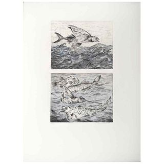 """GEORGINA QUINTANA, Untitled, Signed and dated 97, Etching and roulette engraving a la poupeé 53 / 60, 13.3 x 8.2"""" (34 x 21 cm)"""