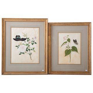 Pair of Botanical Watercolors