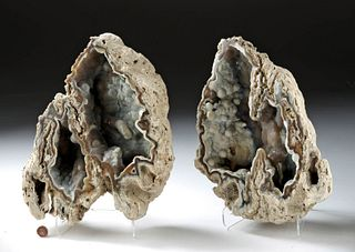 Florida Miocene Agatized Coral Geode - 2 Halves