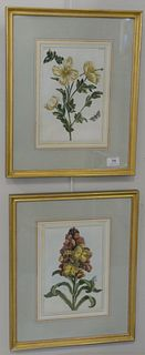 """Pair of Pierre Joseph Buchoz (1731 - 1807), botanical hand colored engravings, similar to Mark Catesby or John Abbot, 11 1/4"""" x 8""""."""