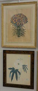 Seven Framed Botanical Engraving Lithographs, Cinera Cum Flore, Lilium Cruentum Polyanthos, Flos Solis Prolifer, two botanical prints, two botanical f
