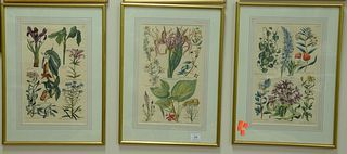 Eight Piece Group of John W. Hill (British, 1716 - 1775), botanical studies, engravings on paper with hand coloring, each inscribed in plate, sight si