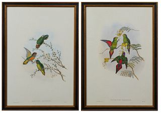 """John Gould (1804-1881, English), """"Psittenteles Wilhelminae,"""" and """"Nasitorna Misorensis,"""" 20th c., pair of parakeet prints, after the 19th c. originals"""