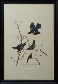 """John James Audubon (1785-1851), """"Louisiana Heron,"""" No 44, Plate 217, 20th c., presented in a polychromed distressed frame, H.- 25 3/8 in., W.- 38 3/4"""