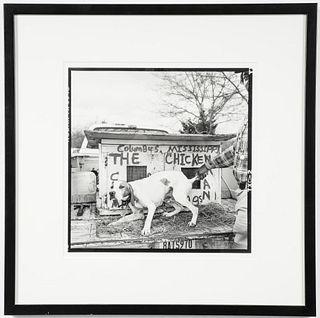 "Birney Imes ""The Chickenman's Dog"" Gelatin Silver"