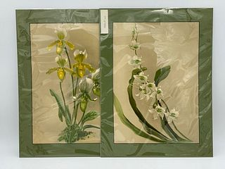 Two Chromolithographs, Orchids