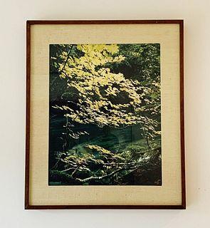 Original Photograph by James Randklev Duck River WA