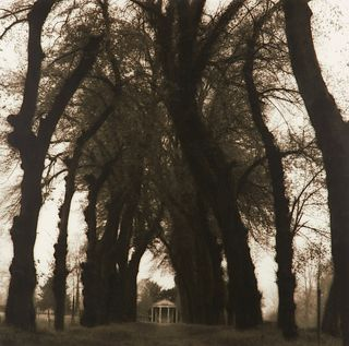 "Lynn Geesaman ""Parc de Canon France from Pocties of Place"" Gelatin Print 1995"